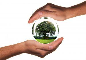 אקולוגי וחסכוני: כל הסיבות להשתמש בחשבונית ירוקה לעסקים